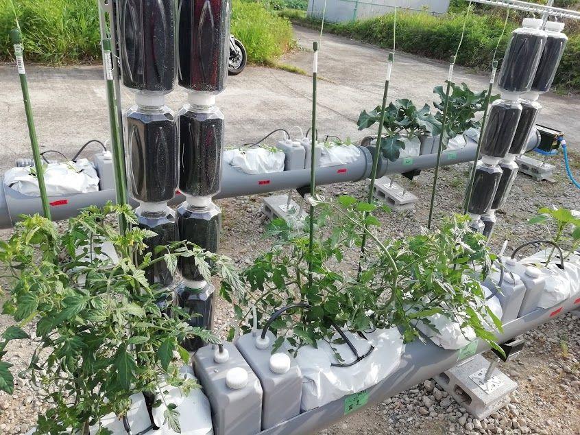栽培状況の写真:elixirで生成された水が、SoBiCシステムに自動供給され、自動栽培が行われている様子