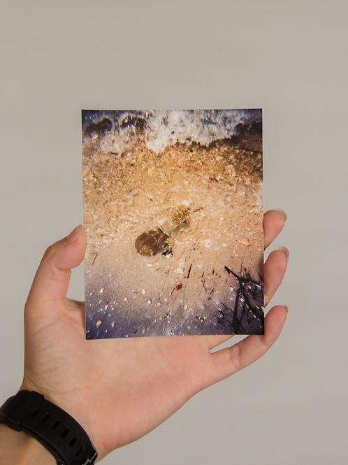 Horseshoe Crab 4 x 5 inch Archival Signed Print