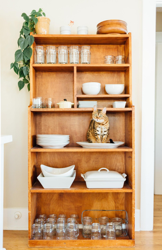 Cat sitting on a shelf with dishes