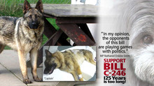 """BILL C-246: Over 150,000 """"for"""", 237 """"against"""" improving Canada's animal prot"""