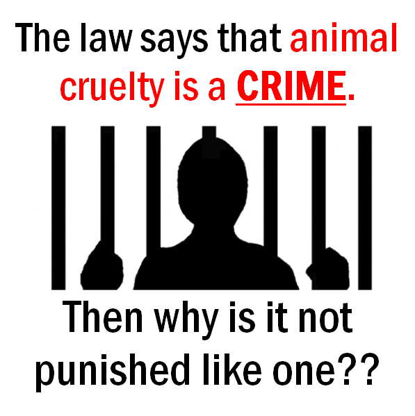 Animal cruelty is a crime
