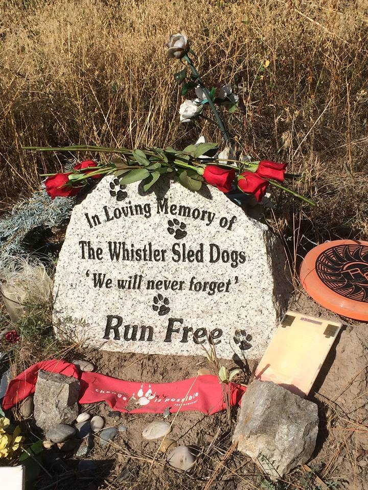 Whistler Sled Dog headstone