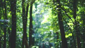 Opmerkingen van Bert Maes bij Beplantingslijst Staatsbosbeheer