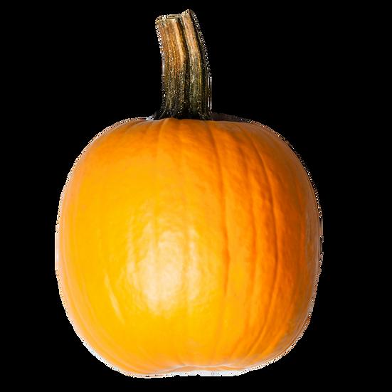 Squash seeds 'Jack O' Lantern' ORGANIC