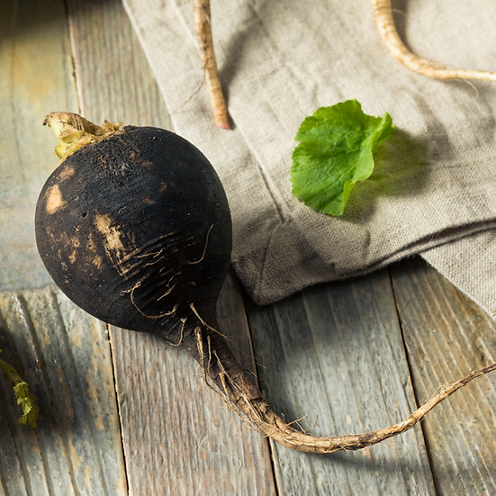Radish Seeds 'BLACK SPANISH ROUND' ORGANIC