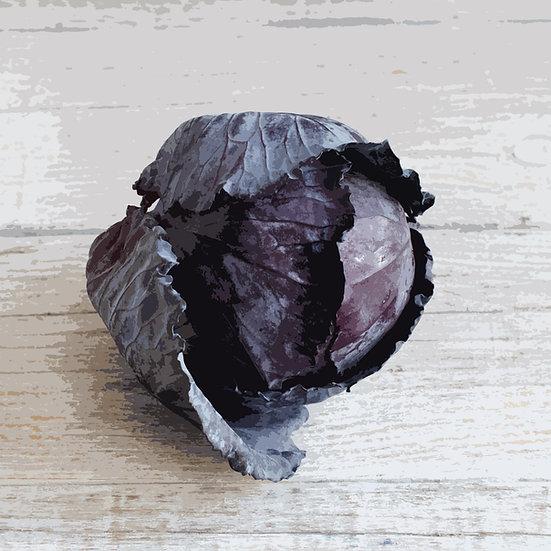 Cabbage seeds 'Red Langedijker Bewaar 2' ORGANIC