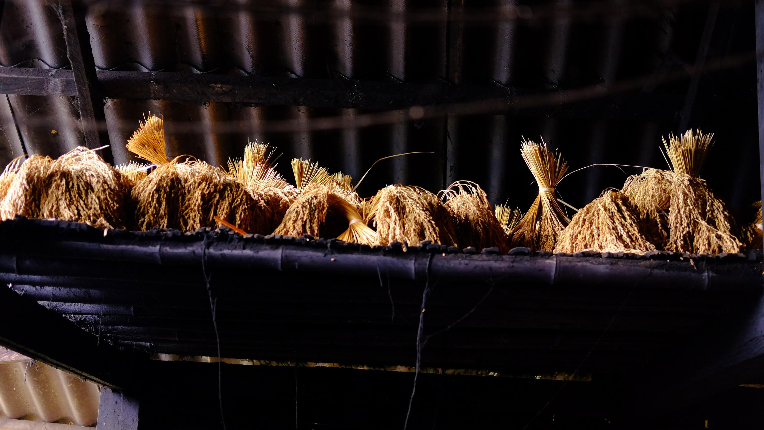 Séchage du riz au dessus du foyer