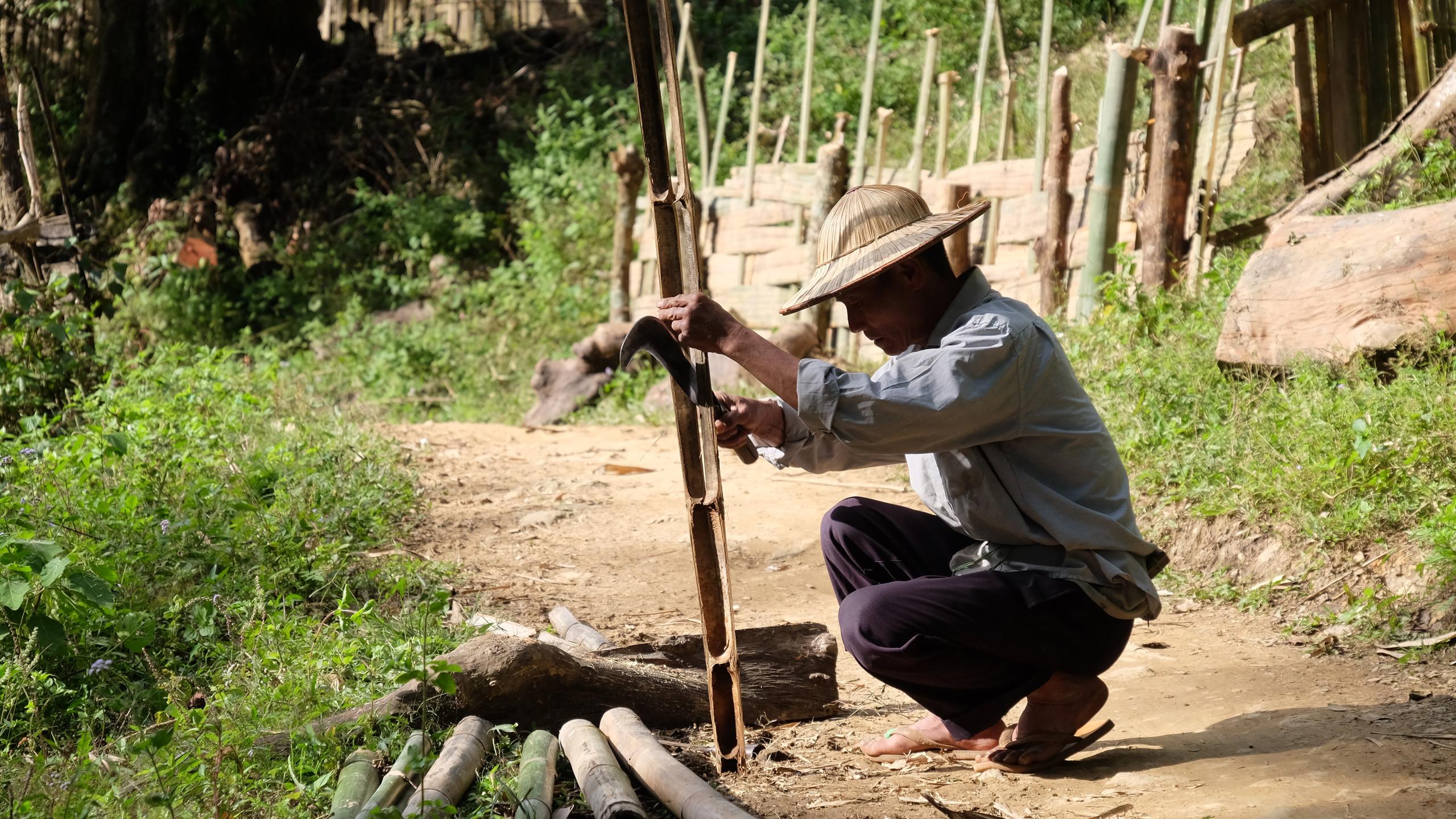 Construction d'un palissade en bambou.