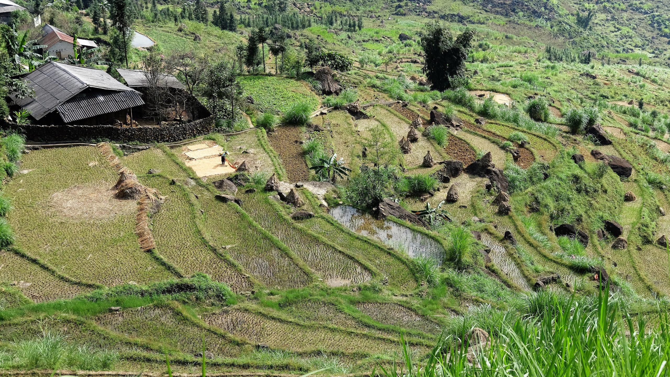 Culture traditionnel dans un village.