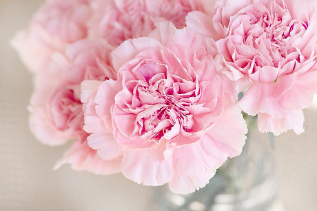 carnation-1325012_1920.jpg