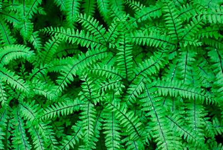 Growing ferns from spores at McAlpin Farm
