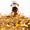 Thumbnail: HEXAGONS (CHARLOTTE) Magpie Glitter Shapes 4g Jar