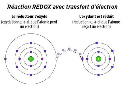 ASEA Régénération Cellulaire