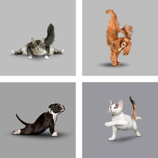 Yoga Dogs (and Cats)