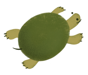 update_turtle.png