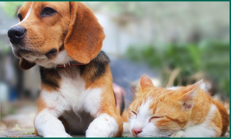 Pet Balancing Programs