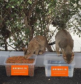 ANIMALIA-22_edited.jpg