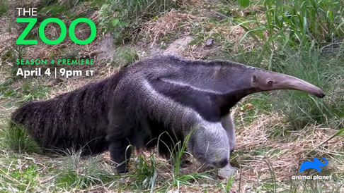 THE ZOO, Season 4 - Animal Planet