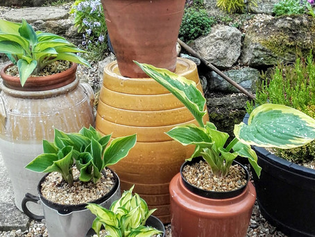 Deter slugs and snails - try these ideas