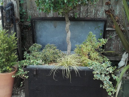Ideas for vintage trunks - these make great containers and will last for years.