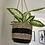 Thumbnail: Sea grass hanging planter