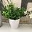 Thumbnail: Set of 3 faux plants