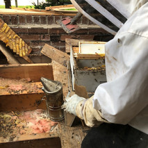 Bees buliding a large hive in Aurora Home.
