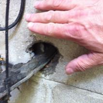 Rats & Mice in Markham.