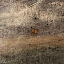 Bedbugs in Motel / Hotel boxsprings