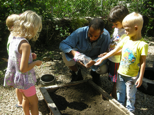 Seeds Sprouting in Organic Garden