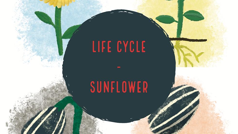 Life Cycle - Sunflower (Digital)