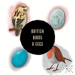 British Birds & Eggs