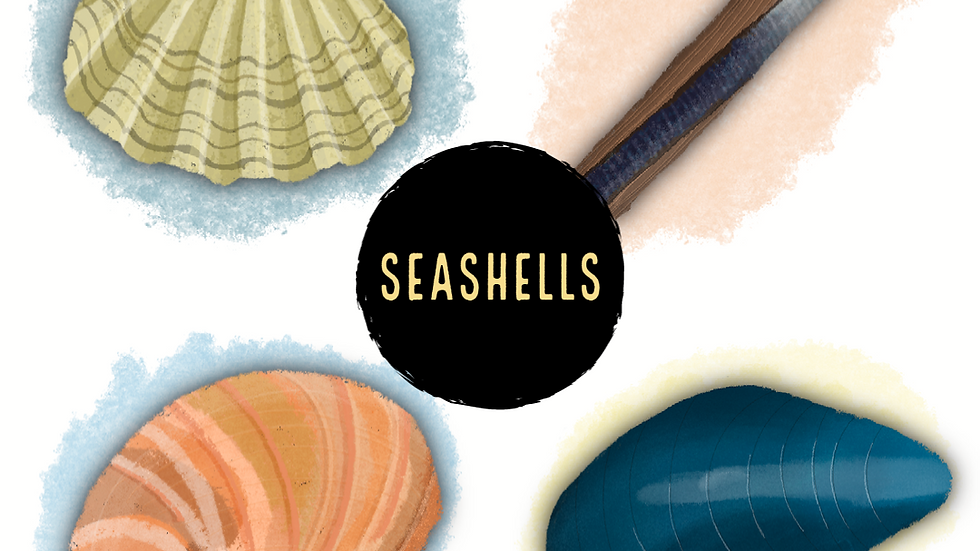 Seashells (Digital)