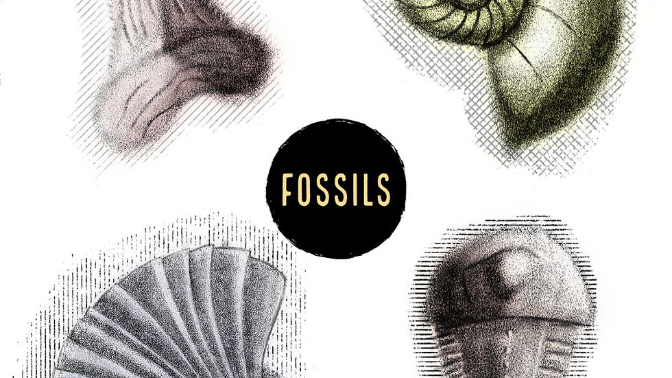 Fossils (Digital)