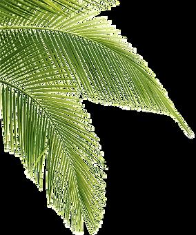 kisspng-palm-trees-clip-art-portable-net
