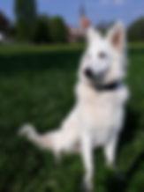 Weisser Schäferhund, Pina