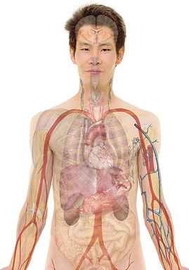 Immune System: Anatomy and Physiology Part 2
