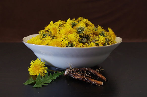 Local Spotlights: Dandelion Root