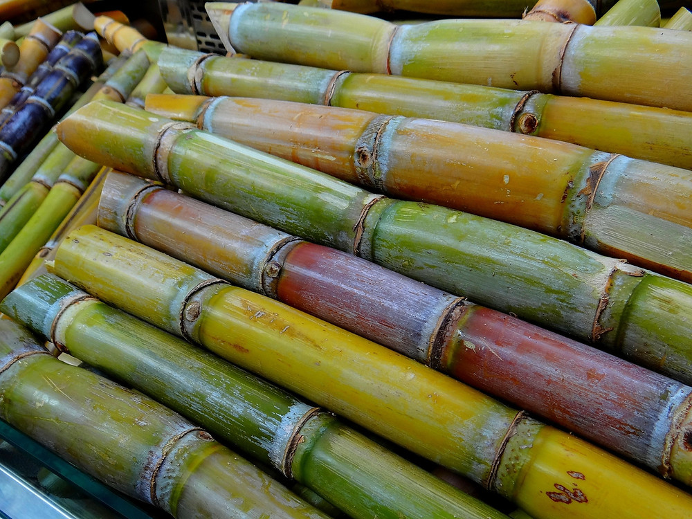 Cane Sugar Stalks