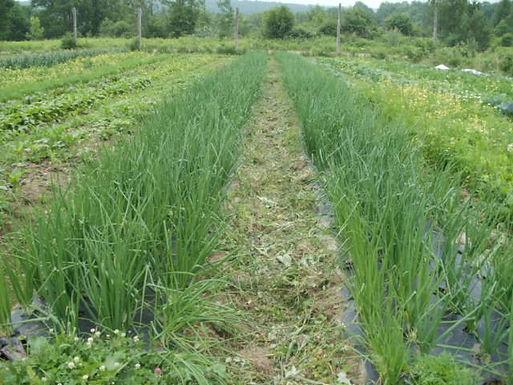 Local Spotlights: Living Acres' Spring Greens