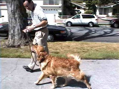 Woman Leaves Dog In Hot Truck On A Sweltering Summer Day In July, Adam Throws A Fit