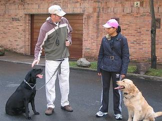 reno-dog-trainers.jpg