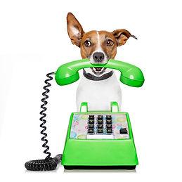dogwithphone.jpg