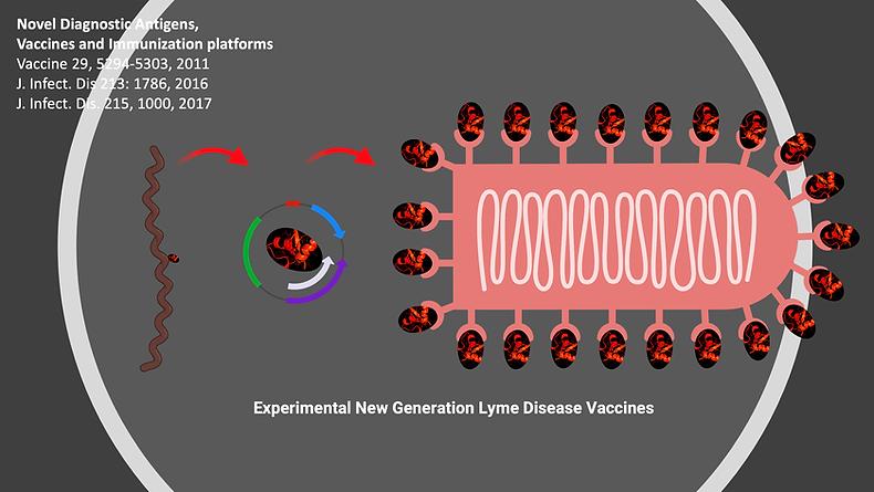 research_novel diagnostic antigens.png