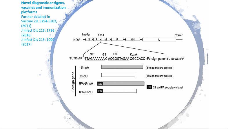 Novel diagnostic antigens, vaccines and