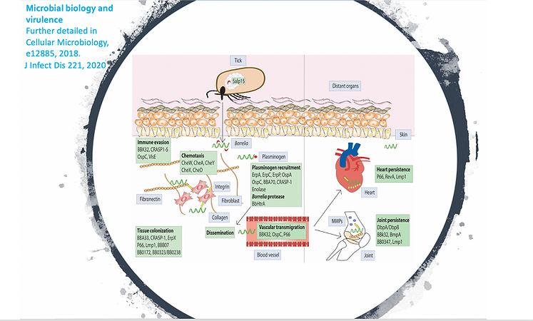 Microbial biology and virulence (1).jpg