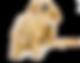 Pet dander