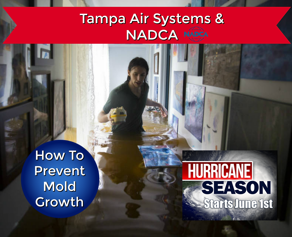 HOw to prevent mold in your HVAC system during Hurricane Season