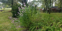 Beautiful Flowers by Lear Rd