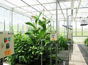 Organica Interior.jpg